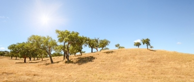 A typical scene of the rolling hills of the Alentejo.