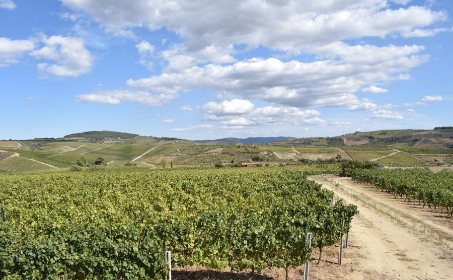 The Avessada Plain, next to Favaios.