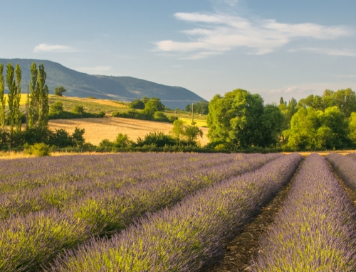 How to embrace the laid-back lifestyle in France